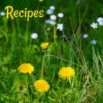 A Culinary Spring in Maine – Dandelions and Fiddleheads