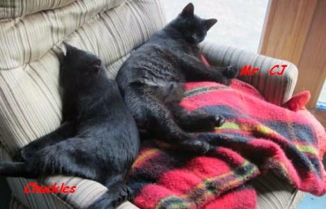 The Cat Boys, cat, kitten, cats, kittens,