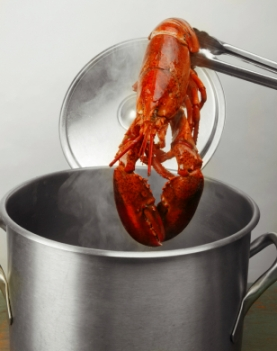 Boiled  Maine Lobster being taken from the pot