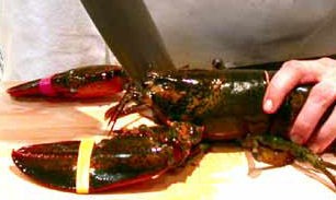 Killing a Maine Lobster