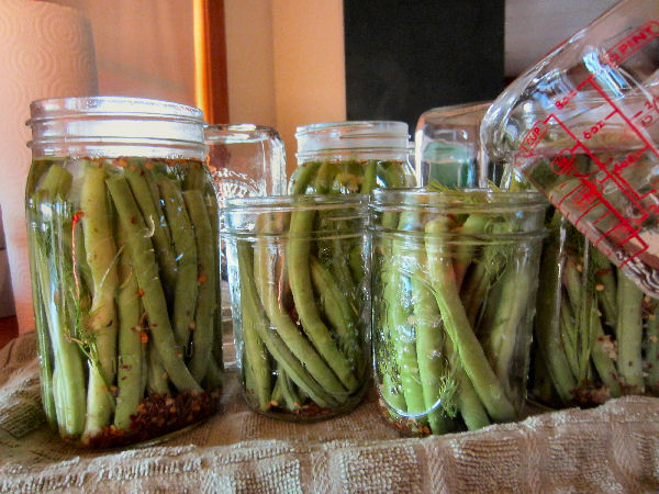 Hot pickling brine for dilly beans being poured into canning jars