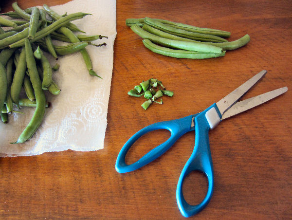 snip and cut green beans to length for canning using our dilly bean recipe