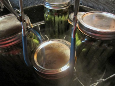 canned dilly beans, water bath canning tutorial, how to can green beans