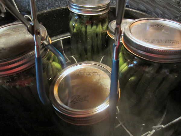 Removing canned dilly beans during the water bath canning tutorial on how to can green beans