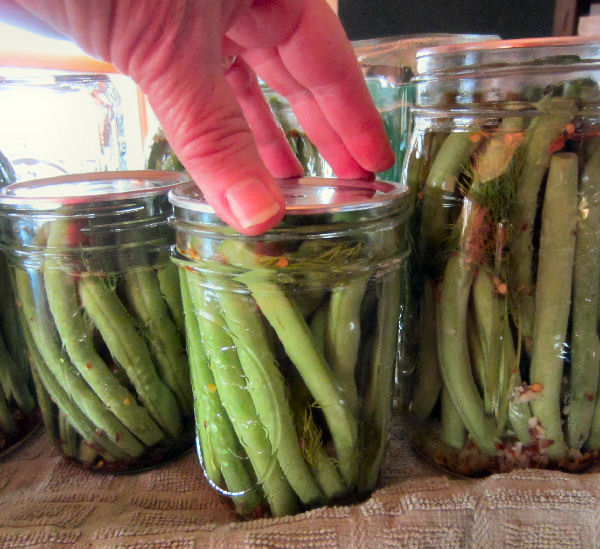 Placing canning jar lid on jar filled with green beans, herbs, and brine in the process of making dilly beans using the water bath canning method.