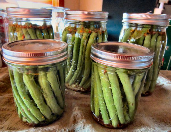 Canning jars filled with dilly beans Ready for water bath canning
