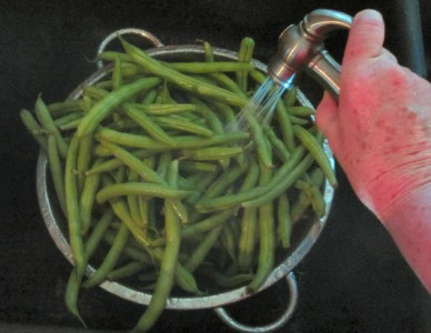 Washing green beans before canning as pickled dilly beans