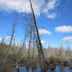 Simple As That: Northwoods Bog