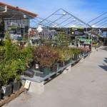 Spring Fever Remedy – The Home Depot Garden Club #DigIn