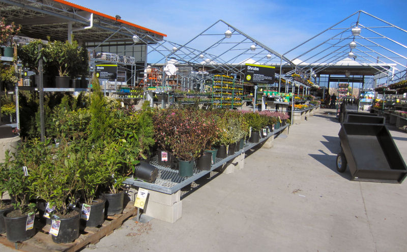 Home Depot Garden Center, shrubs, flowers