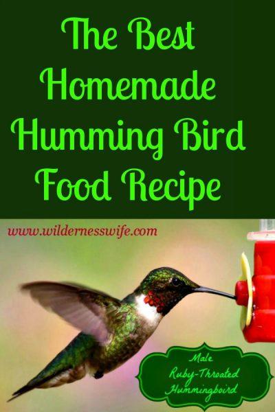 Male ruby throated hummingbird eating at a hummingbird feeder
