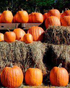 Pumpkins, pumpkin, pumpkin recipe, pumpkin recipes, pumpkin risotto recipe, slow cooker pumpkin recipes