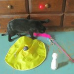 Super Duper Super Moon and Chuckles the Cat