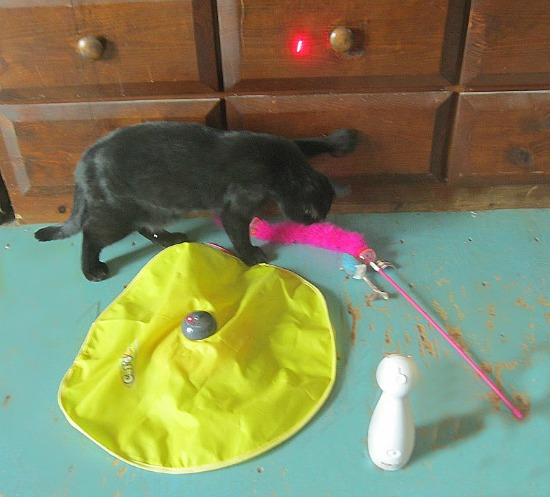 cat toy, cats toys, pet toys