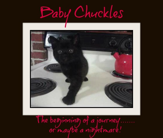 Chuckles-cat-kitty