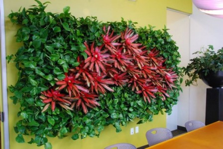 anit pollutant plants