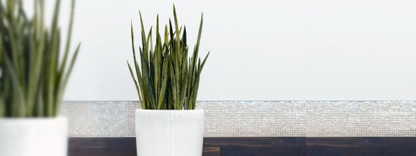 Plants have a beneficial and calming effect on thehome.  They provide a calming and relaxing feature bringing nature into the home. In addition they help to purify the homes air increasing oxygen levels and removing pollutants from the air.