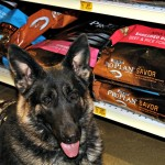 Training the Working German Shepherd with Purina® Pro Plan®