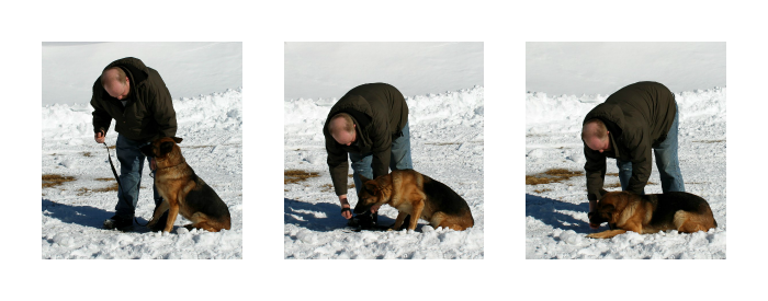 Training your dog, Purina Pro Plan, PetSmart