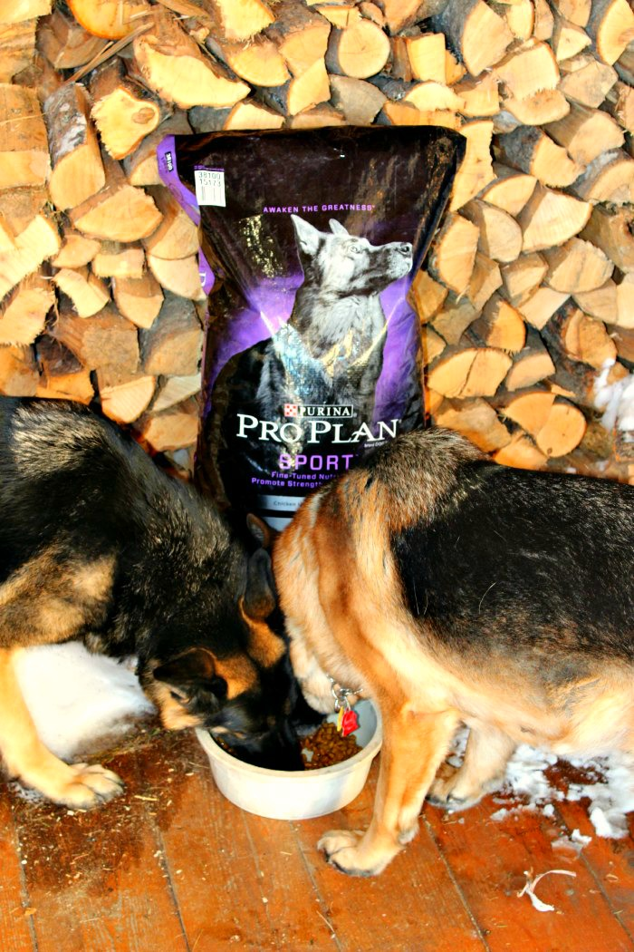 Purina Pro Plan, German Shepherd Dog, PetSmart