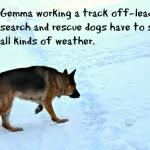 Best GPS Dog Tracker Collar – Whistle