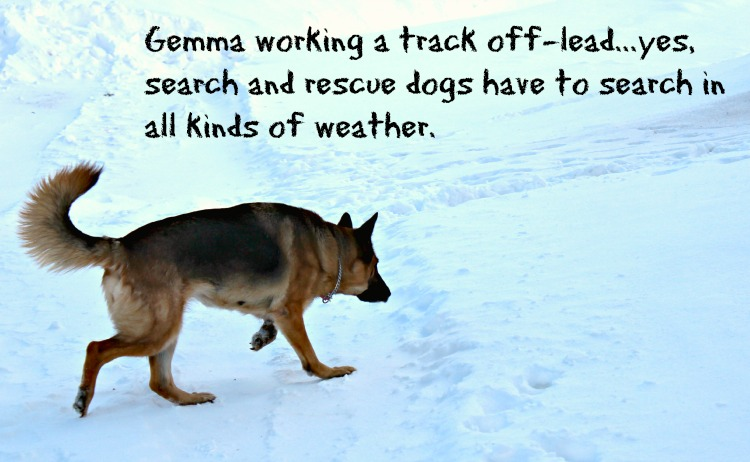 Gemma's Whistle GPS Dog Tracker helps us keep track of her when she is out on a search and rescue track.