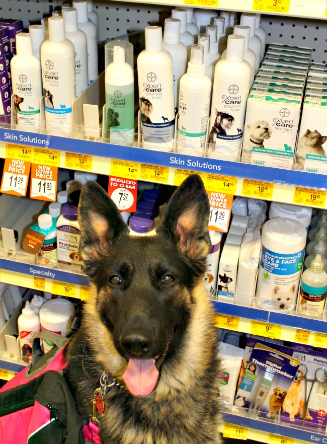 Bayer ExpertCare, PetSmart, Skin Care for dogs, grooming for dogs, quality care, specially formulated for dogs