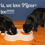 The Cat Boys Love #WellnessPetFood