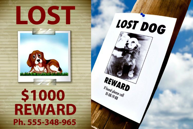 Get a Whistle GPS Dog Tracker so you don't have to put up Lost Pet posters like these.