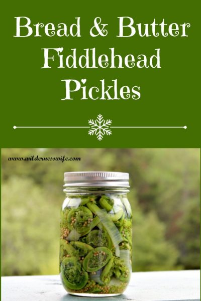 Jar of canned bread & butter fiddlehead pickles sitting on table with Maine North Woods in the background