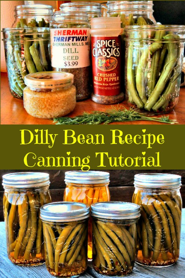 Ingrdients for making delicious dilly beans using our easy dilly bean recipe and following our step by step water bath canning tutorial.