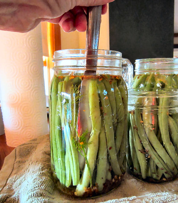 Using knife inserted into canning jars filled with green beans to remove air bubbles during the water bath canning process.