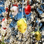 Outdoor Easter egg tree on flowering apple tree
