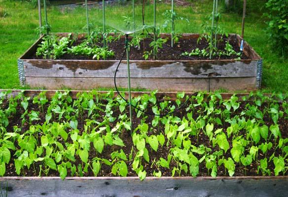 Home Depot Garden Club, Home Depot Raised Bed Garden Kit