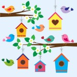Birds, spring, birdhouse