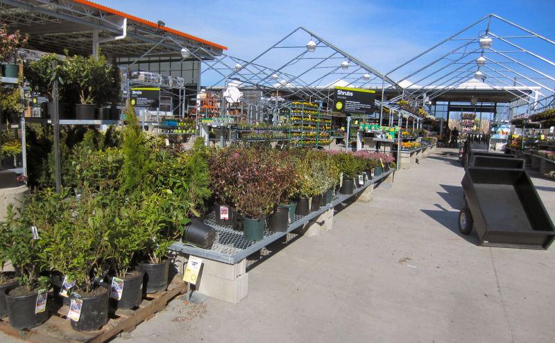Home Depot Garden Center, shrubs, flowers