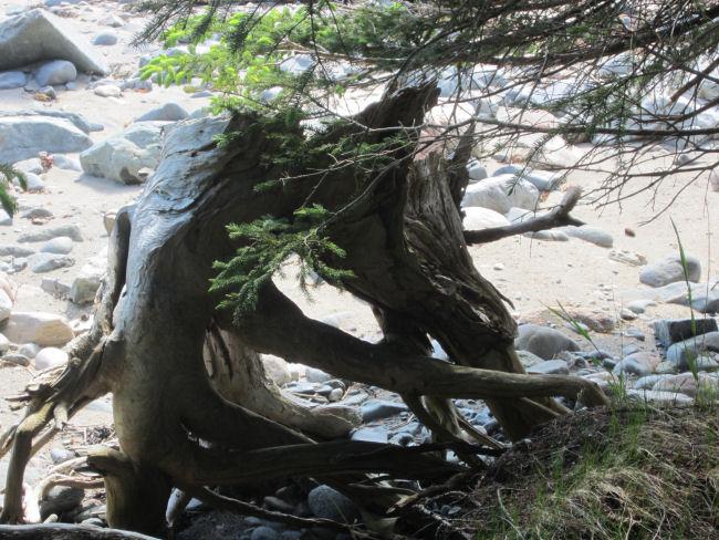 Maine Coast, Maine driftwood, beach combing in Maine