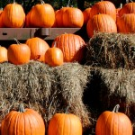 Pumpkins, pumpkin, pumpkin recipe, pumpkin recipes, pumpkin risotto recipe, slow cooker pumpkin recipes