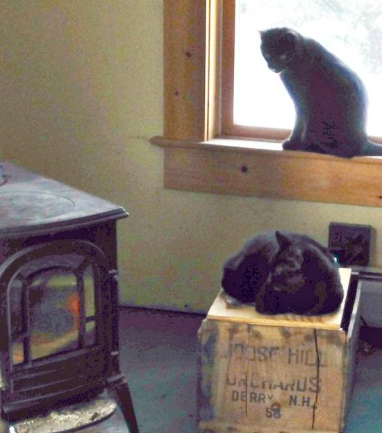 Cat, kitten, kitty, cabin fever, Maine, Nature's Recipe