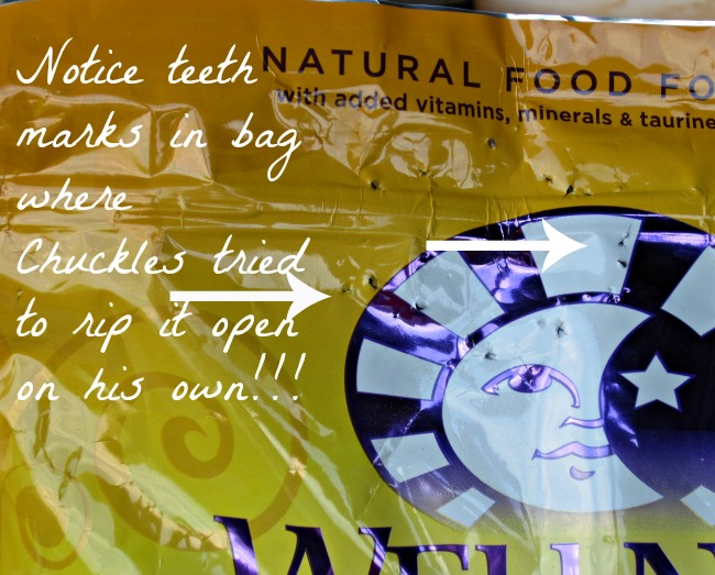 Cat food,  kitten food, nutrition