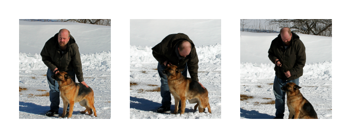 I raise and train beautiful German Shepherd dogs as mobility service dogs for the disabled.