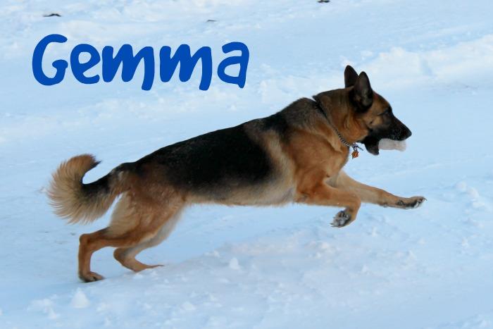 German Shepherd Dog, #ProPlanSmart