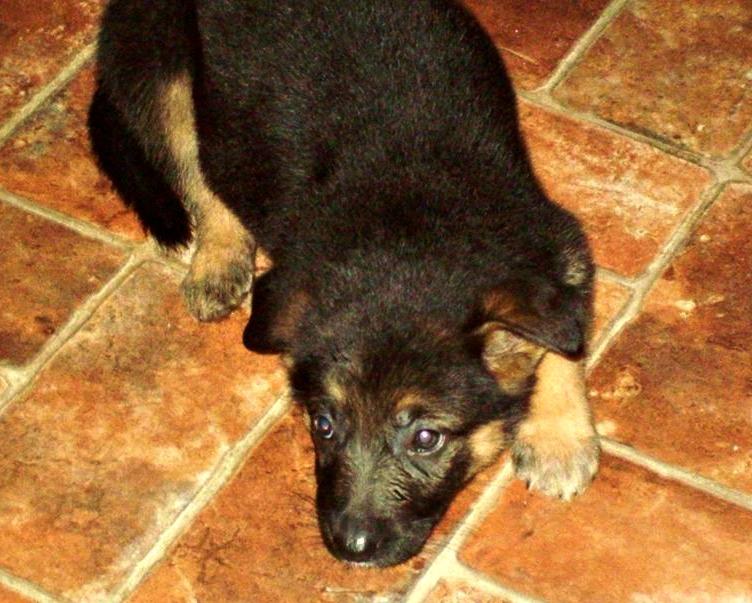 guilty puppy, purina, puppyhood