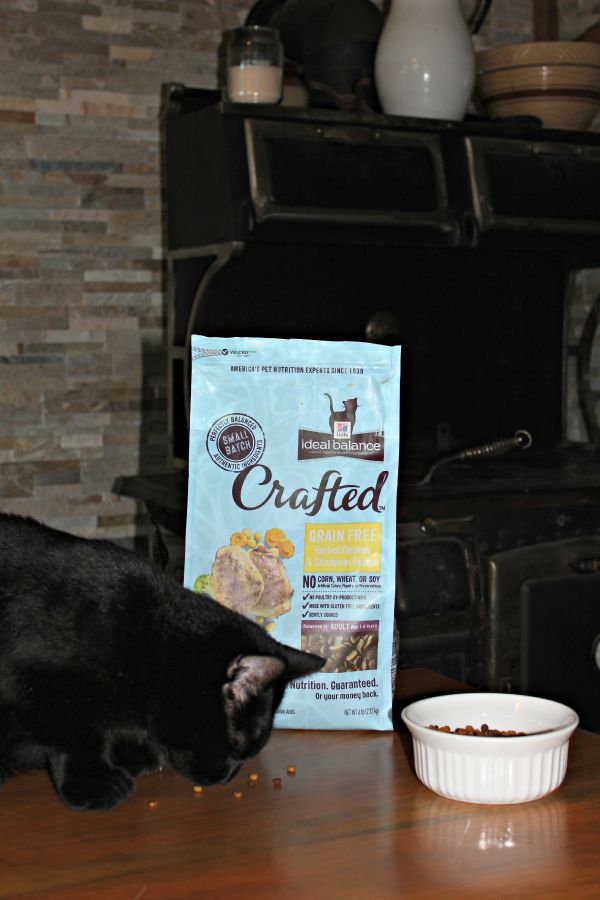 Hill's Ideal balance Crafted, cat food, dog food
