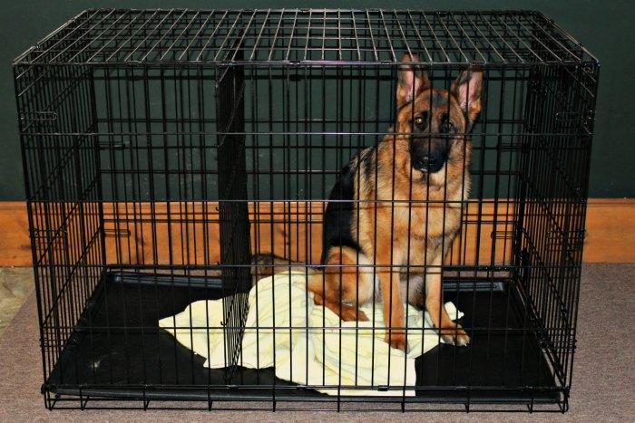 German Shepherd, dog crate, Purina One
