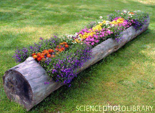 log planter, Garden decor, container gardening, recycled garden decorations