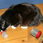 catnip-rollaround-toy