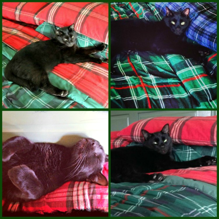 Black cat napping on bed after having been treated with Frontline®Plus for cats from @walmart