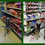 I use the Whistle GPS Dog Tracker on my mobility service dog, Malibu.